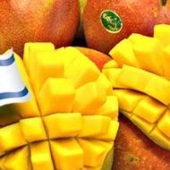 Israel – a mango powerhouse